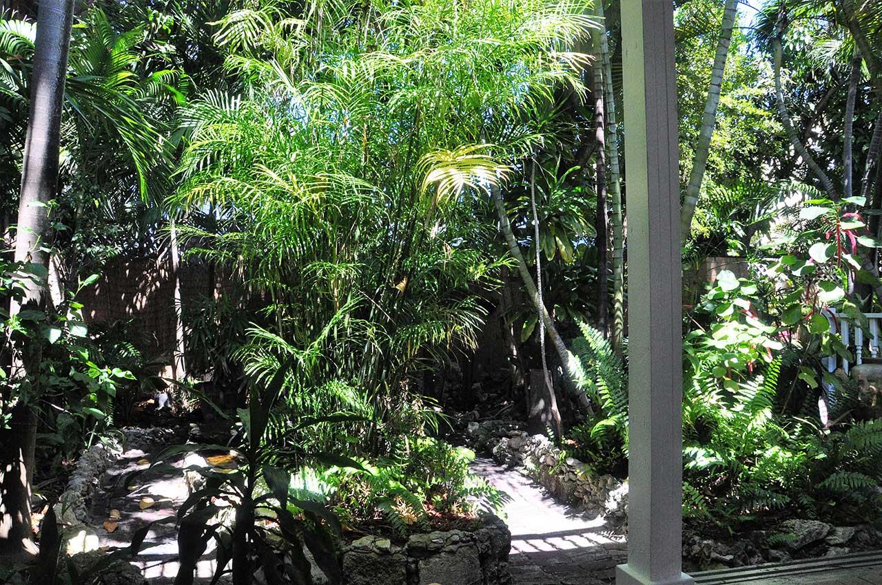 Suite - Fishtail Palm